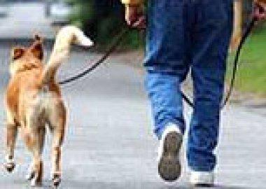 В Бендерах начали выдавать паспорта на собак